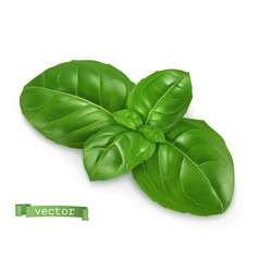 Ocimum cooking basil 3d realistic food object vector