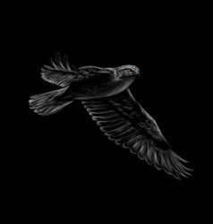 portrait of a flying falcon on a black background vector image