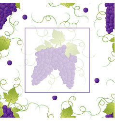 Pueple grape banner on white background2 vector