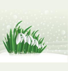 Snowdrop vector