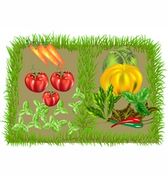 Vegetable food background vector
