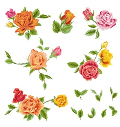 Watercolor Roses Set - floral background vector
