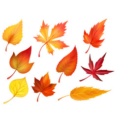 autumn foliage of fall falling leaves icons vector image