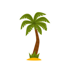 beautiful palm tree tropical evergreen plant vector image