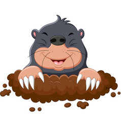 cartoon cute mole vector image