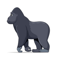 gorilla animal standing on a white background vector image