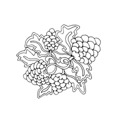 Hand drawn doodle outline grape fruit magic line vector
