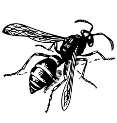Wasp odynerus vector