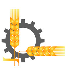 Field ripe wheat spikelets reaping harvest time vector