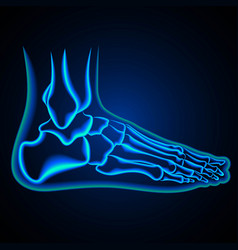 Foot anatomy ankle x-ray vector