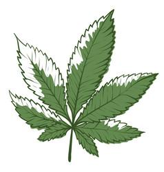 marijuana icon green cannabis leaf herbal vector image
