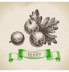 Gooseberry Hand drawn sketch berry vintage vector image vector image