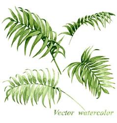 Palm leaves set vector