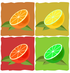 citrus fruit vector image