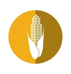 corn cob ripe leaves icon yellow circle vector image