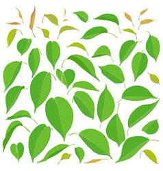 green big and small leaves set vector image