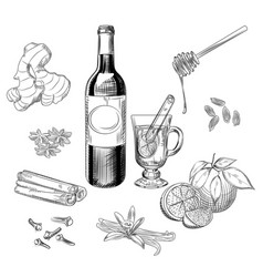 Hand drawn citrus mulled wine and spices set vector