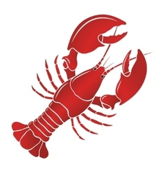 Boiled lobster on a white background vector