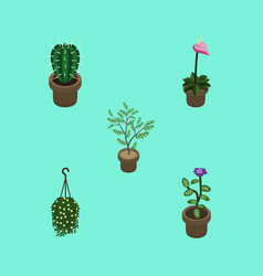 Isometric plant set of fern peyote blossom and vector