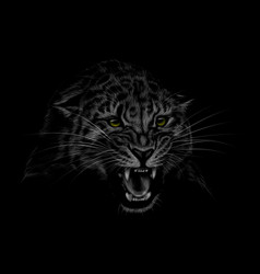 portrait of a leopard head on a black background vector image
