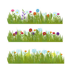 Summer grass with wild beautiful flowers vector