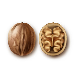 two ripe walnuts vector image