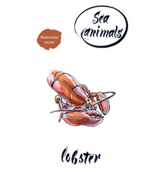 lobster watercolor hand drawn vector image