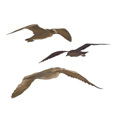 Birds gulls set vector image