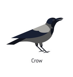 hooded crow isolated on white background smart vector image