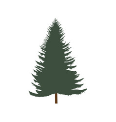 Lush spruce isolated on white background vector