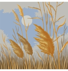 Yellow reeds in nature in autumn vector