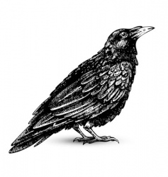 raven vector image vector image