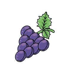 Grape fruit harvest fresh vector