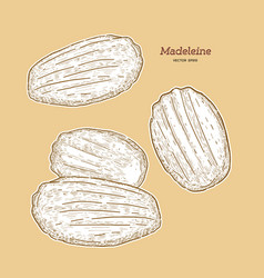 Madeleine de commercy famous french pastry vector