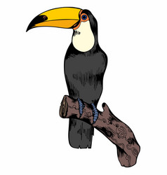 Toucan hand drawing for design vector