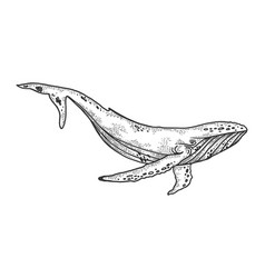 Whale sketch vector