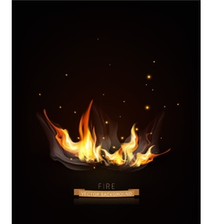 burning fire on a dark night background vector image vector image