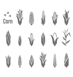 Corn icons vector image vector image