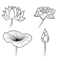 floral water lily elements for design vector image
