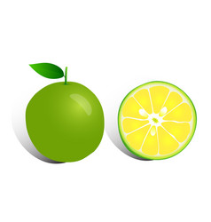 fresh lemon on white background vector image