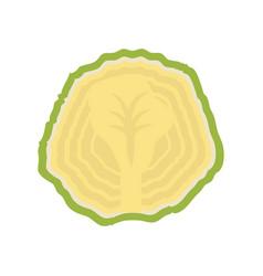 Cauliflower vegetable natural vector