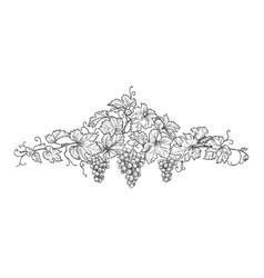 hand drawn decoration with grape branches vector image