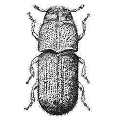 Pine beetle vintage vector