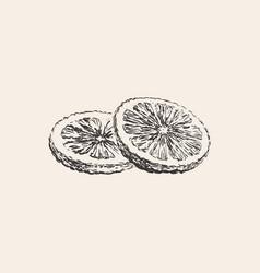 round lemon slices grapefruit orange citrus vector image