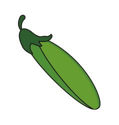 Zucchini vegetable food fresh vector