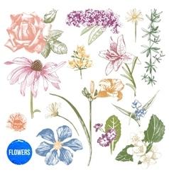 Hand drawn garden flowers set vector image vector image