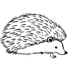 hedgehog stylization icon logo line sketch vector image vector image