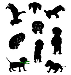 dachshund-6 vector image vector image