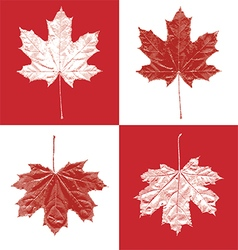 Canada vintage maple leaf set vector