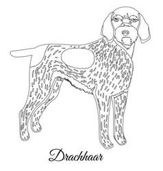 drachhaar dog outline vector image